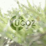 Простой способ заработка на сайтах от uCoz