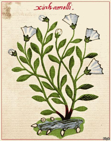 Ботаника раздел манускрипта Войнича