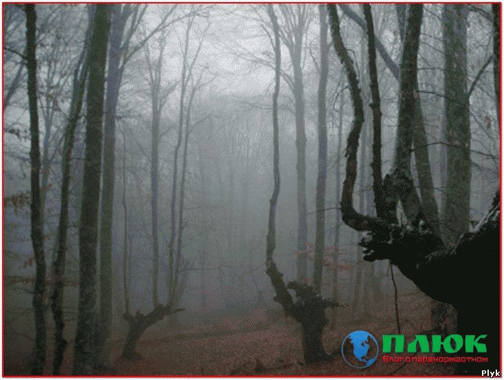 Паранормальное место в Канаде - Ведьмин лес или лес ведьм
