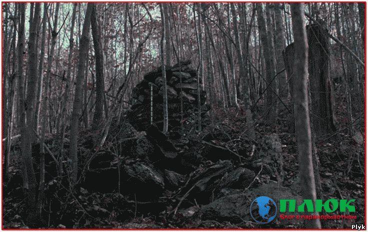 Лес ведьм в Канаде
