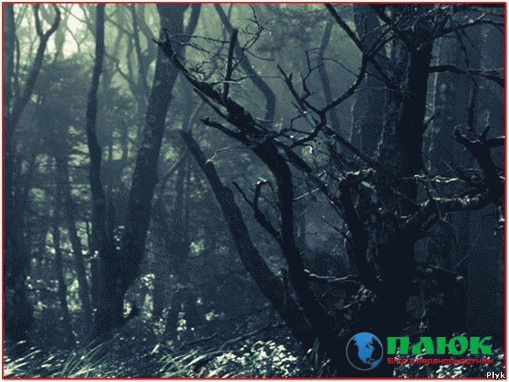 Ведьмин лес в Канаде аномальное мести и довольно мистическое