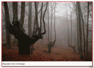 Ведьмин лес в Канаде – еще один объект из списка мистических мест на - аномальные зоны, паранормальные места