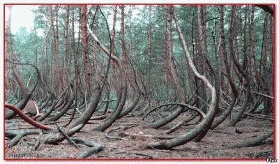 В пьяном лесу часто видели людей с песьими головами