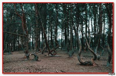 Странный лес в районе Зоны Прейзера