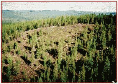 Феномен Тунгусский метеорит