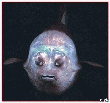 Вид рыб с прозрачной головой