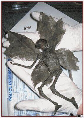 Снимок мумии феи проданной на интернет аукционе