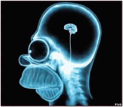 Жизнь без мозгов