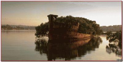 Лес на корабле
