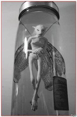 фея найденная Дэвидом Лиаллом 1842 в Шотландии.
