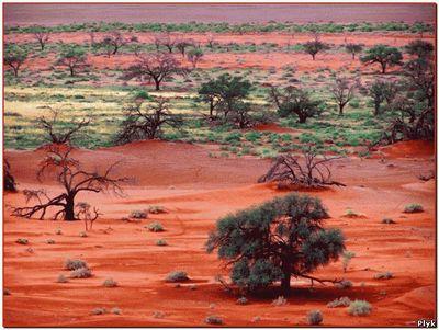 Уникальное место - пустыня Намиб