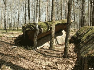 Лес а аномальной зоне