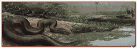 Эти огромные змеи питались преимущественно крокодилами и большими черепахами, но с легкостью могли проглотить корову