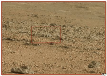 Существо, очень похожее на ящерицу на фото с Марса