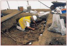 В средневековом Лондоне не было эпидемии бубонной чумы. Причиной мора была не чума