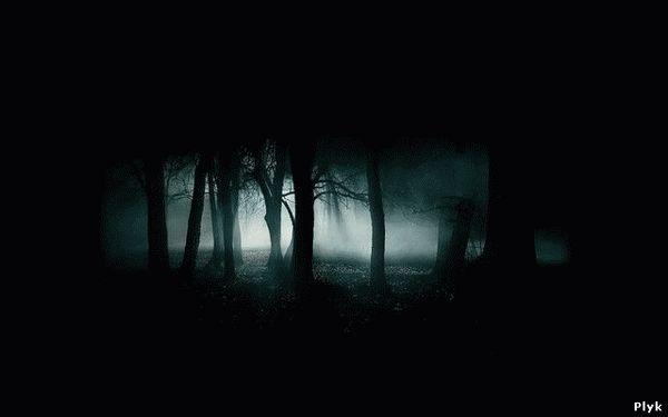 Темный жуткий лес