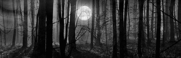 Темный лес...