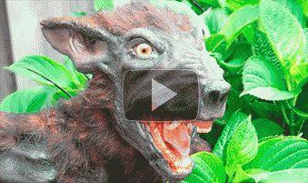 Видео: живая чупакабра наконец поймана. Смотри бесплатно, пока не удалили