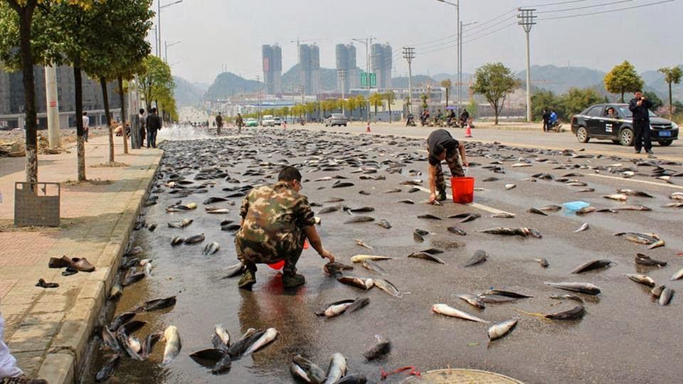 рыбный дождь